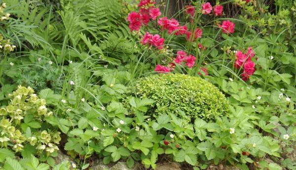 Niwaki Japanese pruning Hortitherapy Meditation Magazine Zen garden Japanese gardens Japanese tools for gardening