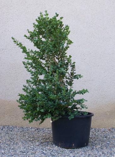 niwaki japanese pruning zen garden japanese gardens japanese tools for gardening