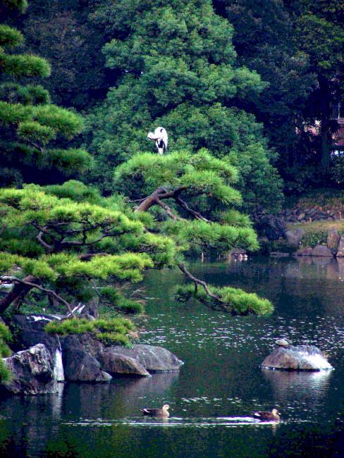 Frederique DUMAS - original authentic japanese pruning niwaki versus clouds pruning
