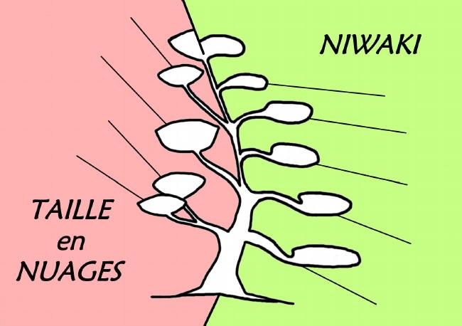 La taille en nuages n est pas de la taille japonaise authentique niwaki e - Arbre taille en nuage vente ...