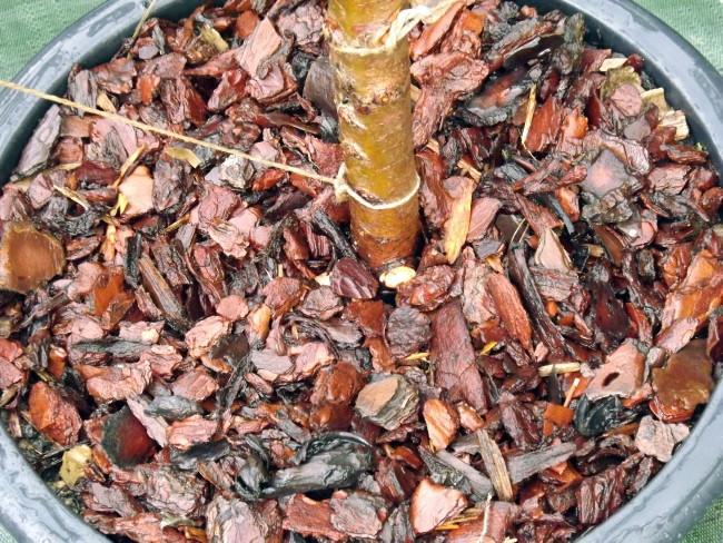 permaculture niwaki culture biologique éthique paysagisme