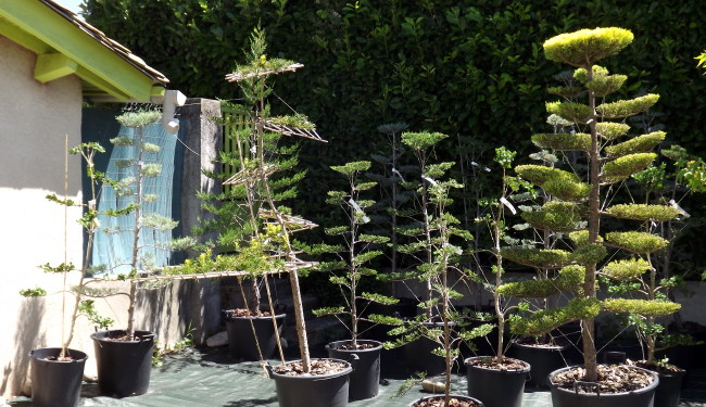 pepinière jardin shinzen no sei niwaki pre-niwaki talencieux frederique dumas