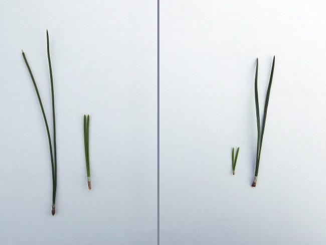 niwaki, jardin japonais, taille japonaise, inspiration, creativite