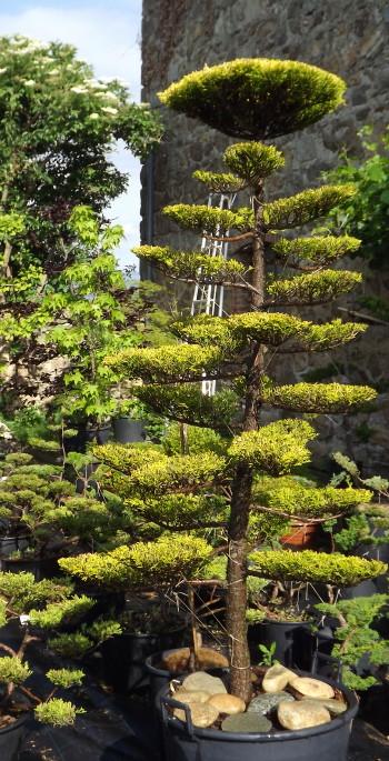 jardin japonais tsubo-niwa frederique dumas niwaki taille japonaise