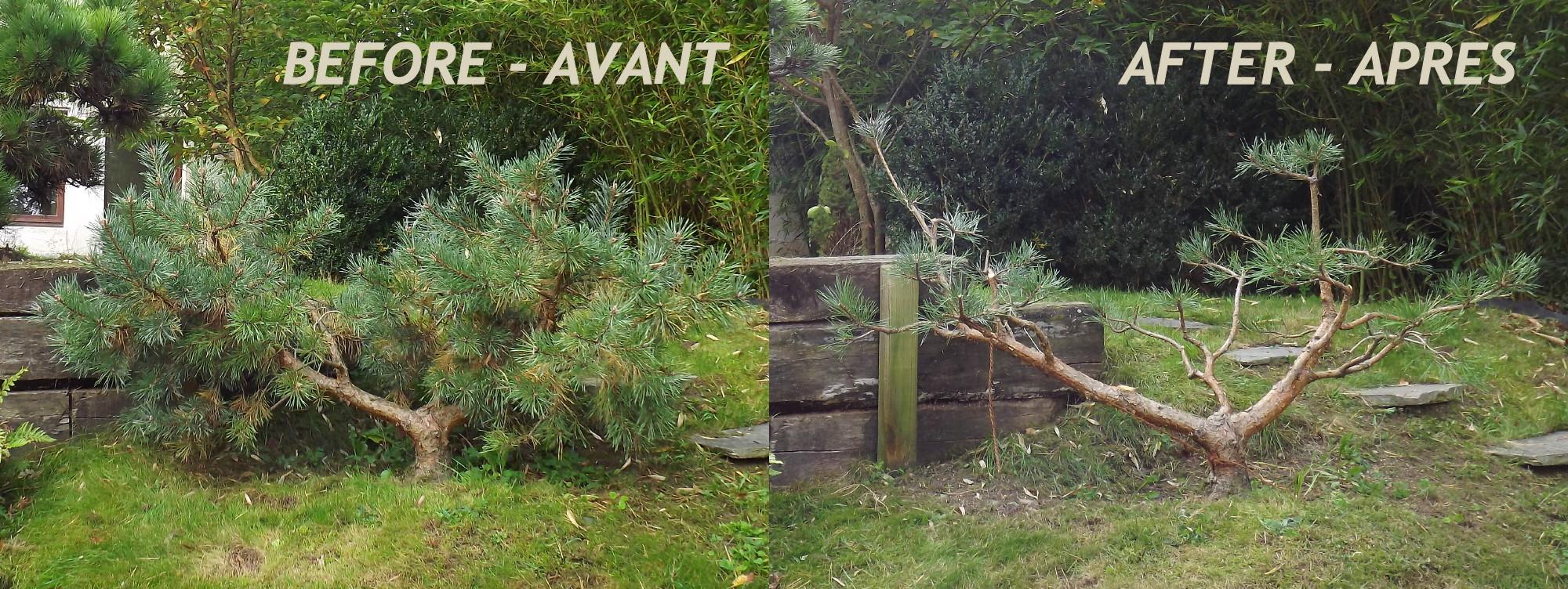 Pin en cr ation et entretien d espaces verts parcs et for Paysagiste lamballe