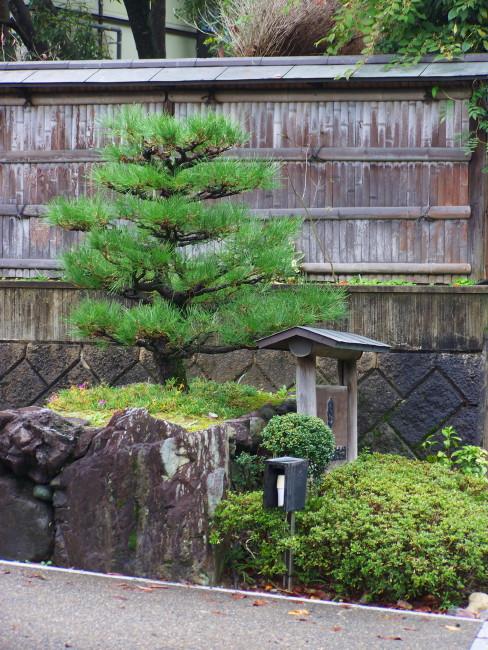 cursus complet taille japonaise hortitherapie