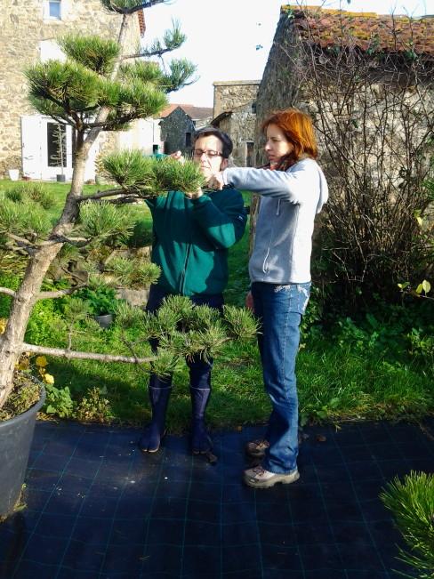 niwaki taille japonaise hortitherapie niwatherapie jardins japonais frederique dumas jardin shizen no sei voyage d'etudes au japon accompagnement