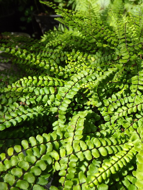 Hortithérapie - Niwathérapie© - Frederique Dumas www.frederique-dumas-landscape.com www.frederique-dumas.com