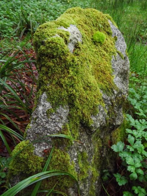 nature mousse fougères jardins japonais rochers granit