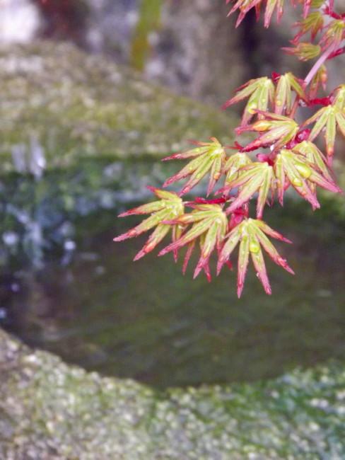niwaki taille japonaise jardin japonais frederique dumas voyage d'etudes au japon tsuboniwa jardin shizen no sei hortitherapie niwatherapie jardins japonais thérapeutique