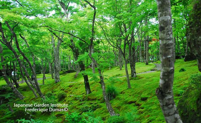 Jardins japonais thérapeutiques - Niwathérapie© - Niwaki et jardins japonais - Frederique Dumas www.japanese-garden-institute.com www.frederique-dumas.com
