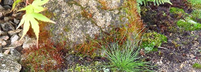 Jardins japonais thérapeutiques - Niwathérapie - Niwaki et jardins japonais - Frederique Dumas www.japanese-garden-institute.com www.frederique-dumas.com www.jardinsplenitudezen.com