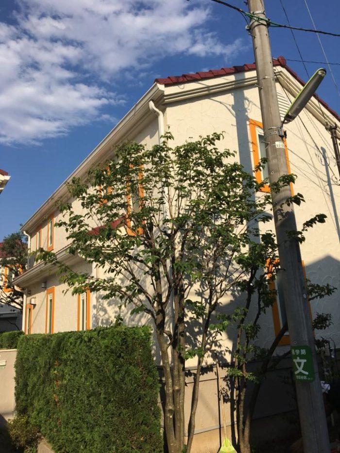 Stages taille japonaise en transparence - Frederique Dumas www.japanese-garden-institute.com www.frederique-dumas.com