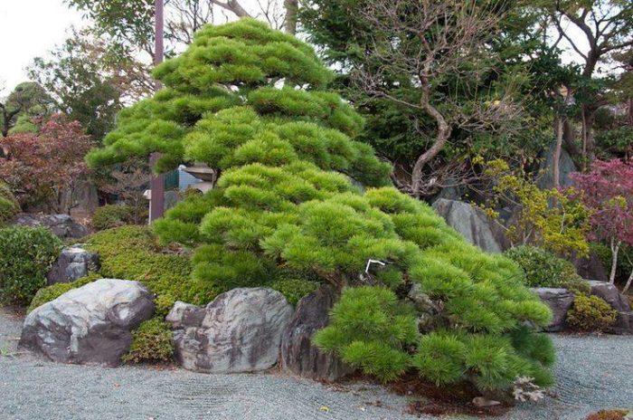 Training videos japanese gardens and niwaki - Frederique Dumas - www.japanese-garden-institute.com www.frederique-dumas.com