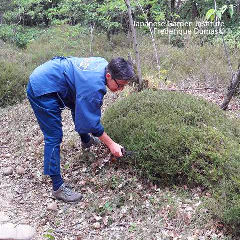 Stage création tamamono et karikomi - Frederique Dumas www.japanese-garden-institute.com www.frederique-dumas.com