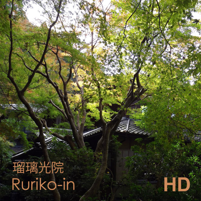Video Ruriko-in - jardin de thé - Kyoto - Frederique Dumas www.japanese-garden-institute.com www.frederique-dumas.com