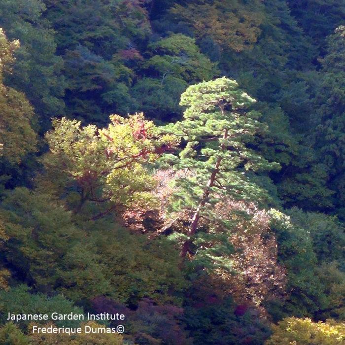 Sublime Sukiya Tour - voyage d'études au Japon - parcours initiatique - Frederique Dumas www.japanese-garden-institute.com www.frederique-dumas.com